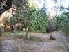 Ruin/Land for sale in Cadiar, Spain