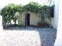 Garden Area with Grape Vines